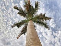 Palmowy drapacz chmur Zdjęcie Stock