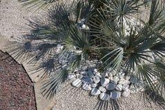 Palmowy flowerbed Zdjęcie Stock
