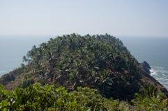 Palmowy gaj Obrazy Stock