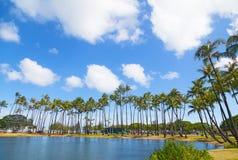 Palmowy gaj blisko nawadnia na tropikalnej wyspie, Hawaje, usa Zdjęcia Stock