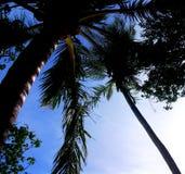 Palmowy gaj na Kuda Bandos & x28; Maldives& x29; Zdjęcia Stock