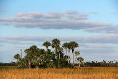 Palmowy hamak Obrazy Royalty Free