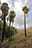 Palmowy jar, palm springs zdjęcia stock