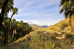 Palmowy jar, palm springs zdjęcie royalty free
