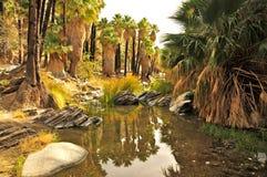 Palmowy jar, palm springs obraz stock