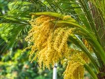 Palmowy kwiat obrazy royalty free