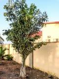 Palmowy kwiat domowym ogrodzeniem z słońce promieniami Fotografia Stock