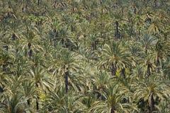Palmowy las Zdjęcia Stock