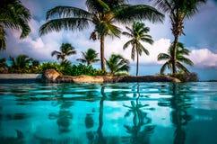 Palmowy las, Barbados Zdjęcia Royalty Free