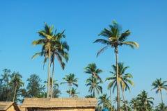 Palmowy las przeciw tłu zdjęcie royalty free