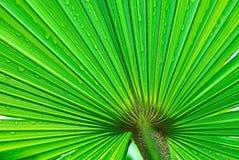 Palmowy liść Obrazy Royalty Free