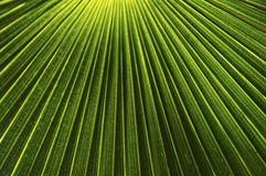 Palmowy liść Obraz Stock