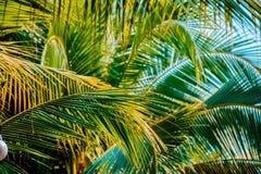Palmowy liść Zdjęcie Royalty Free