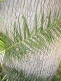 Palmowy liść Zdjęcia Stock
