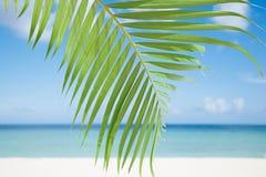Palmowy liść, błękitny morze i tropikalny biały piasek, wyrzucać na brzeg ander słońce Obrazy Stock
