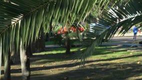 Palmowy liść na tle aleja, dokąd ludzie z dziećmi chodzą na jasnym słonecznym dniu 4K zbiory