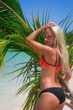 Palmowy liść przy plażą 2 obrazy stock