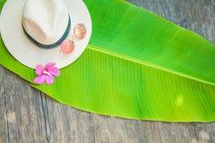 Palmowy liść, słomiany kapelusz, różowy okulary przeciwsłoneczni lata tło Fotografia Royalty Free