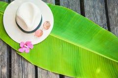 Palmowy liść, słomiany kapelusz, różowy okulary przeciwsłoneczni lata tło Zdjęcia Stock
