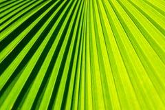 Palmowy liść w szczegółach obraz royalty free