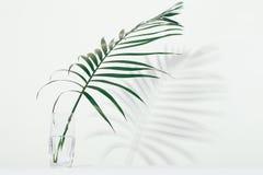 Palmowy liść w szkle woda zdjęcia stock