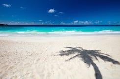 palmowy piaska cienia drzewo Obrazy Royalty Free