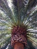 Palmowy raj Obraz Royalty Free