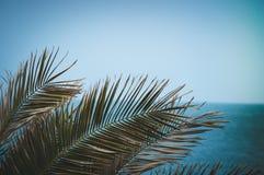 Palmowy raju morze Fotografia Stock