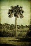 palmowy rocznik Zdjęcia Stock