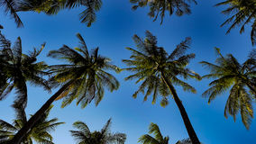 Palmowy rząd Fotografia Stock