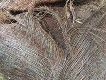 Palmowy sheath fotografia stock