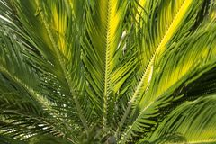 Palmowy urlop fotografia royalty free
