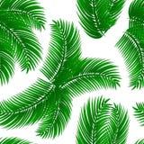 Palmowych liści bezszwowy wzór zdjęcia stock