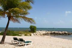 palmowych recliners drzewny poniższy Obraz Royalty Free