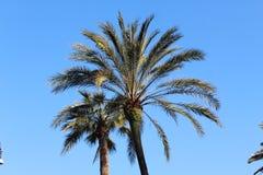 Palmpark in Rome Royalty-vrije Stock Afbeelding