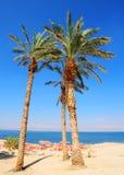 Palms. Umbrellas On Sandy Beach Of Dead Sea, Israel Stock Photography