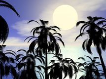 Palms Royalty Free Stock Images