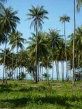 Palms. Palm trees on Koh Samui Royalty Free Stock Images