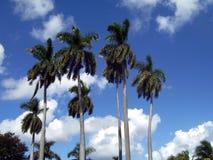 Palms Stock Photography