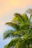 Palms. On a sunset sky (room for text Stock Photography