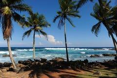 Palms Royalty Free Stock Photo