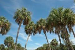 Palms. Palm Trees stock photo