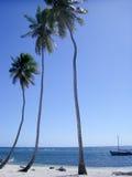 Palms Stock Image