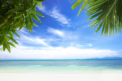 Palms. View of nice tropical beach with some palms royalty free stock photography