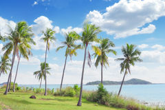 Palms. View of nice tropical shore with some palms around royalty free stock image