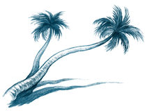 Palms Stock Image