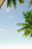 Palms. View of nice tropical beach with some palms around royalty free stock photography