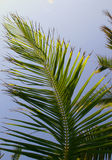 Palms. Blowing in breeze Stock Photos