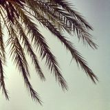 Palms. Warm shot of palms in the summer, spain Royalty Free Stock Photo