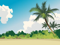 Palms. Coco palms, clouds, beach, forest Stock Photography